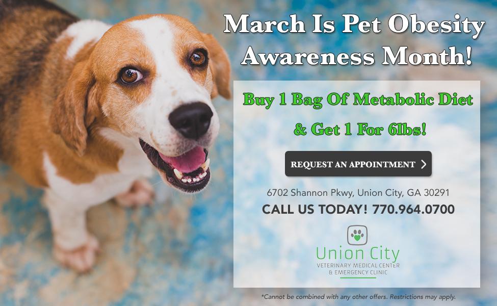Veterinarian in Union City, GA | Union City Veterinary
